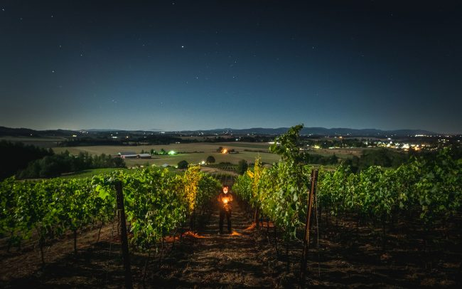 Vineyard at night with man holding light standing between the rows