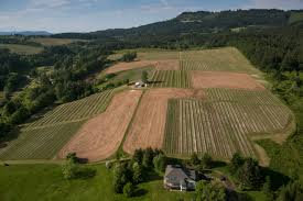 Bird's eye view of vineyard