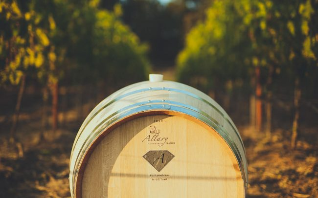 Allary barrel in the vineyard