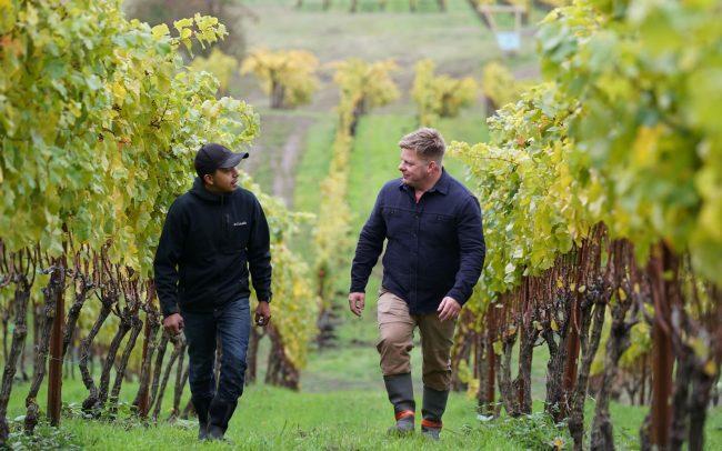 Two men walking and talking in rainy vineyard